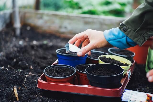a hand placing garden seeds in a pot on a garden bed