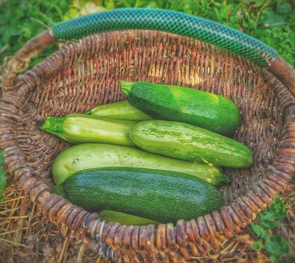 7 Easiest Vegetables to Grow for a quick Harvest