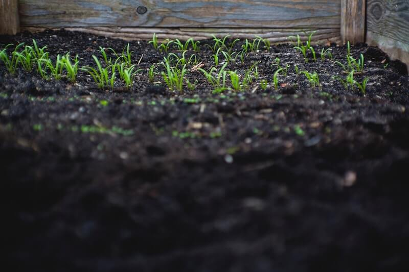 seedling in a raised bed filled with soil