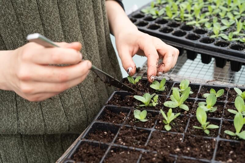 a person gardening and planting seedlings