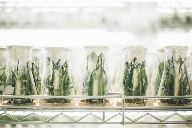 a lot of plants in glass jars in a lab