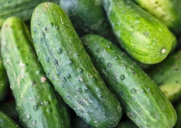 Is a Cucumber a Vegetable or Fruit?