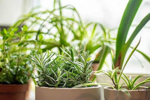3 herbs plants in a container