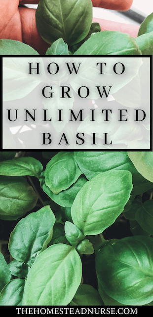 HOW TO GROW UNLIMTED BASIL PIN