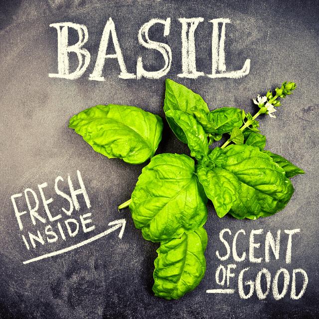 basil plant on the floor