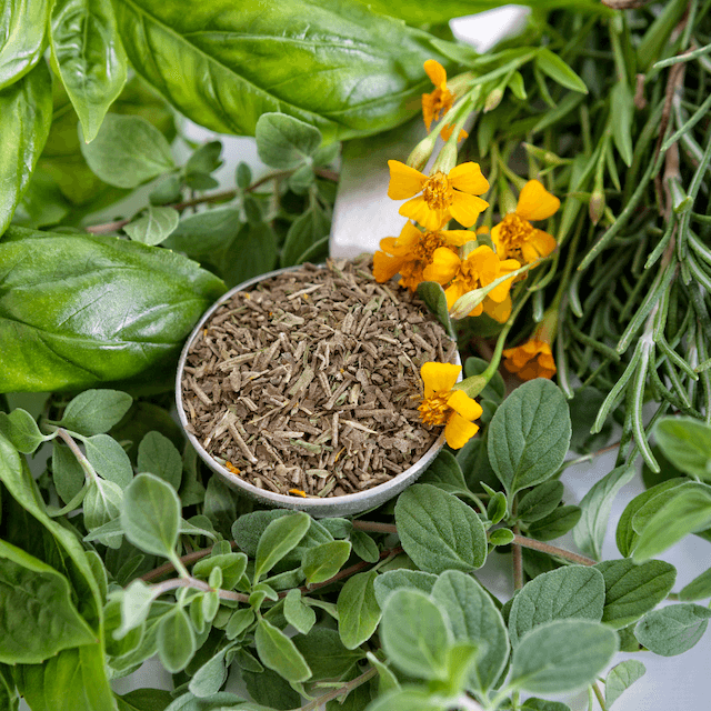 How to Dry Basil 7 Different Ways