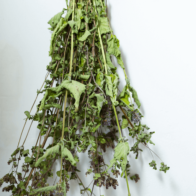 a bunch of dried herbs hanging from a string on a wall