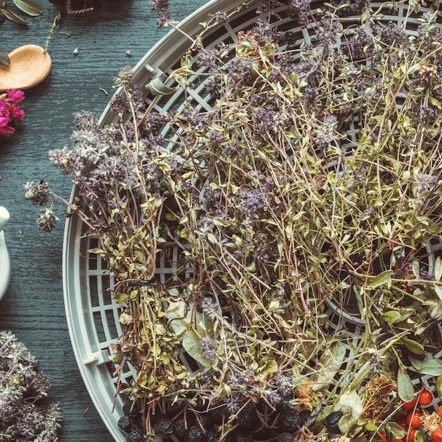 dry herbs on a dehydrator sheet